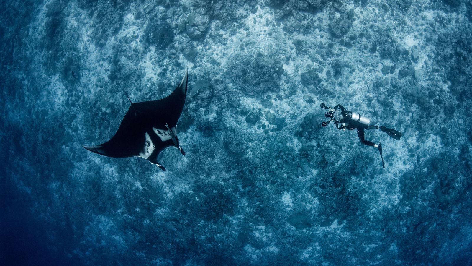 news-main-book-a-date-with-a-manta-ray-at-seasons-resort-maldives-at-landaa-giraavaru.1595266028.jpg