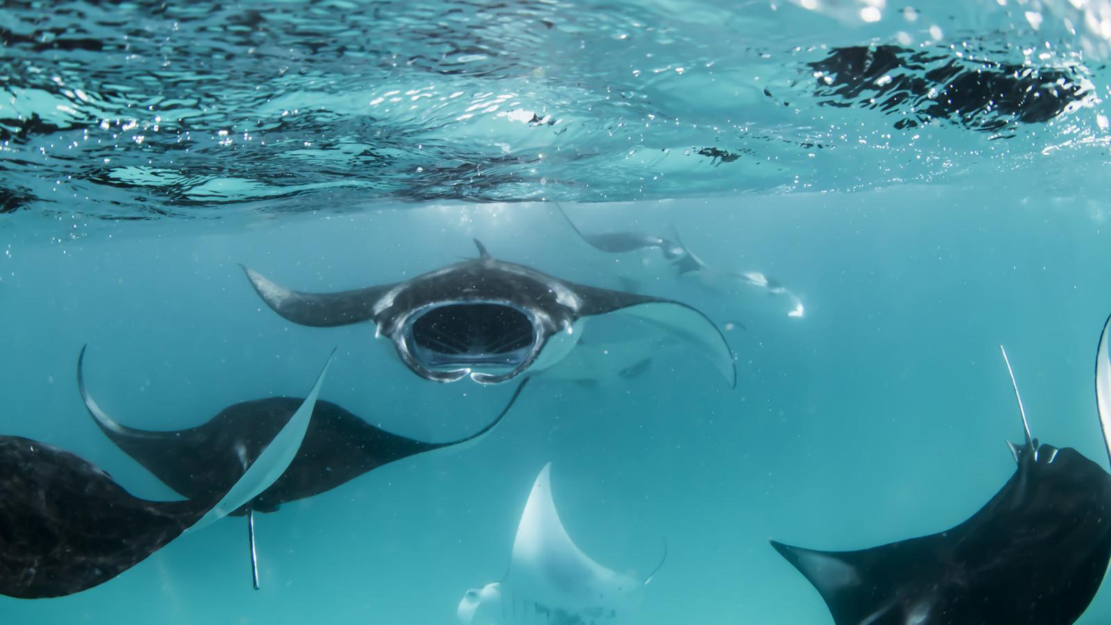 news-main-marine-savers-at-four-seasons-resort-maldives-beyond-the-plastic.1586956329.jpg