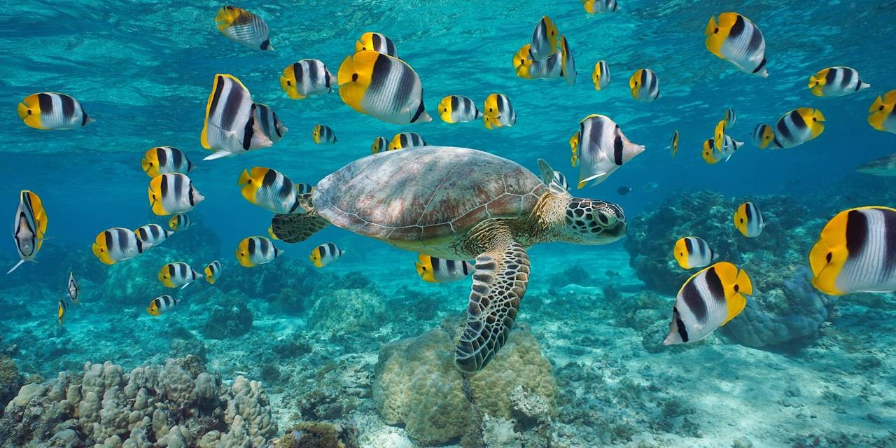 news-main-refuge-en-eaux-profondes-un-espoir-pour-la-restauration-du-corail.1612287655.jpg