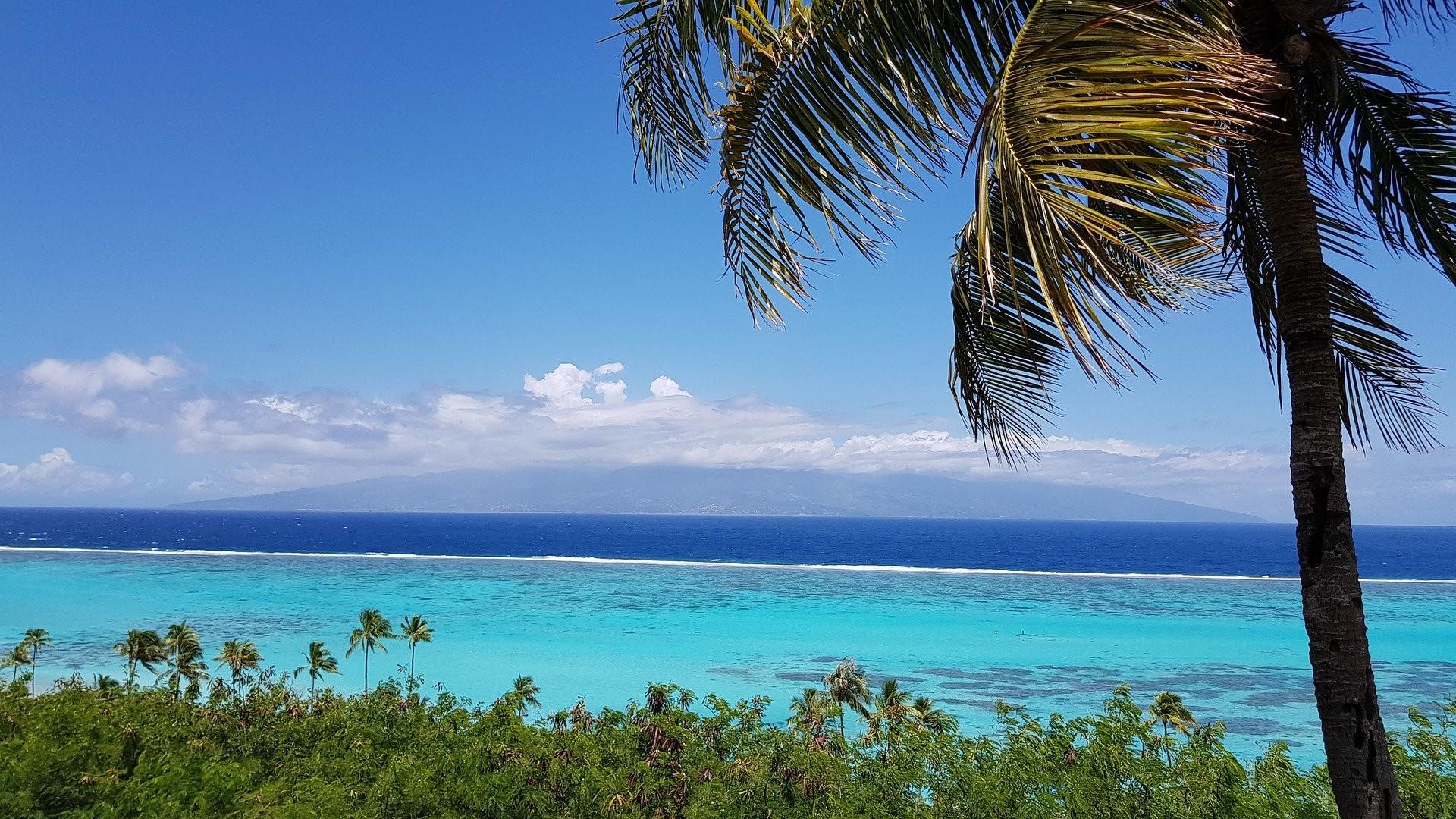 news-main-tahiti-lart-en-ligne-en-vente-et-en-location.1590237376.jpg